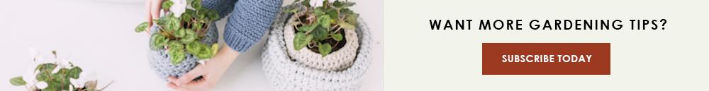 Plant Parenting 101 CTA