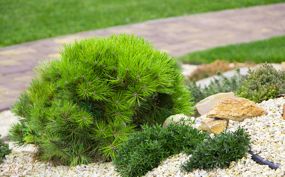 Dammann S Garden Company Rock Garden Design The Best Plants For