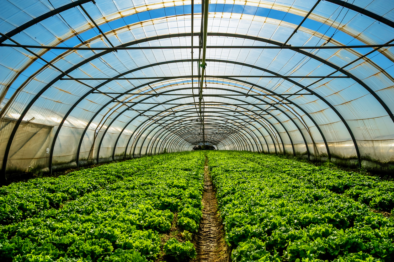 5 Ways to Make Money With Investments In Agriculture — Harvest Returns