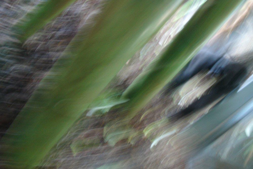 green and gorillas meet. series. Ron Grenko. ©2012