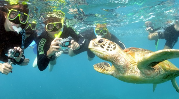 Meet the locals on the Great Barrier Reef - Hawks Beak Sea Turtle