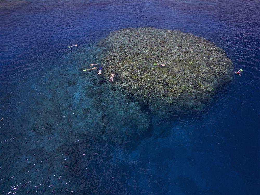 Moore Reef - East Timor Bommie