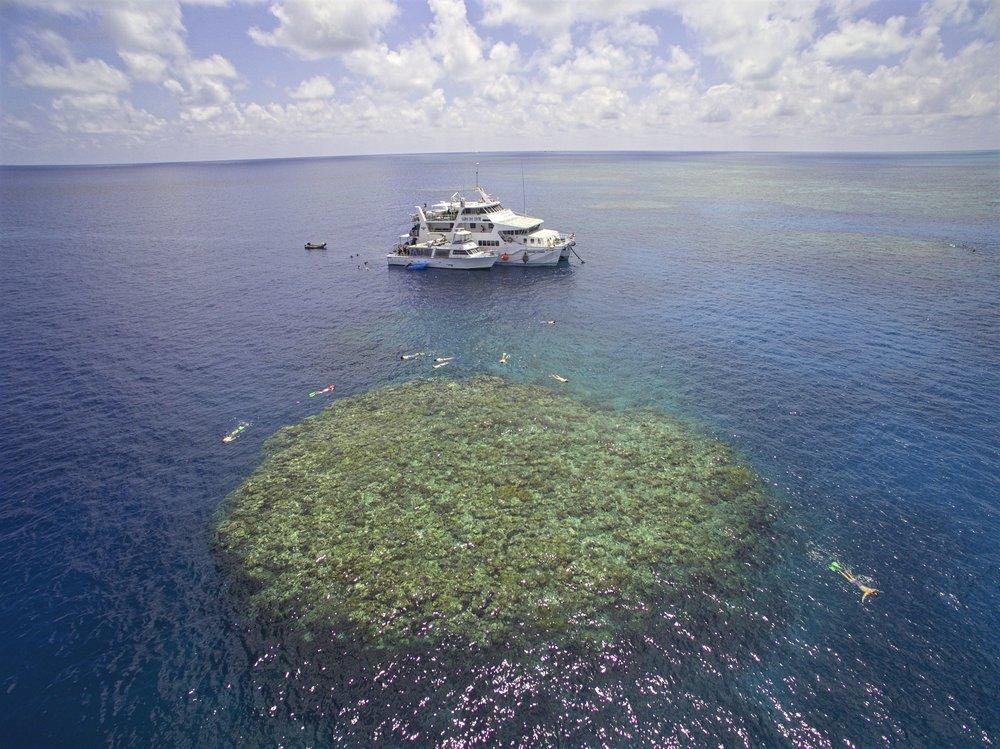Sunkist and Kangaroo Explorer at Moore Reef