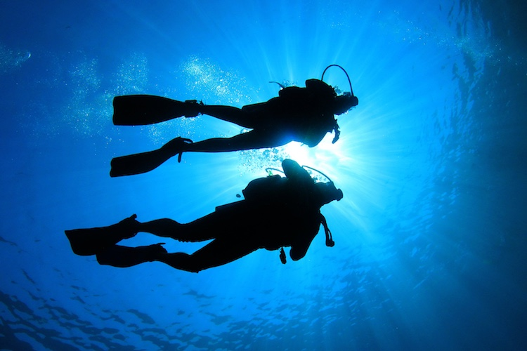 Introductory Dive $230 or Certified Dive $230 - Includes snorkel trip