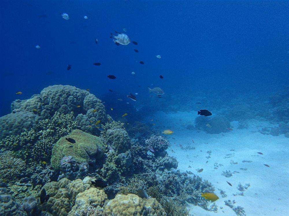 fish n coral small.jpg