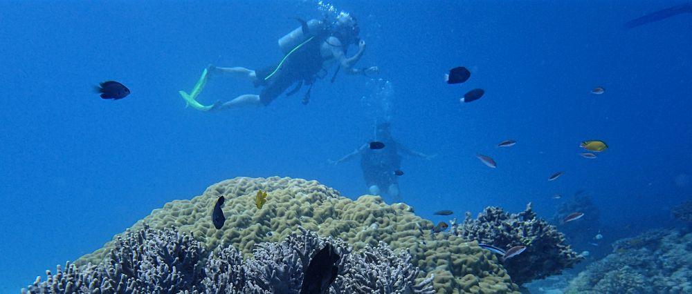 FI divers.jpg