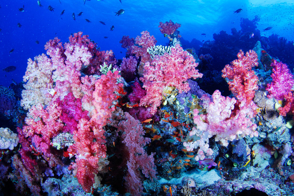 soft_corals3.jpg