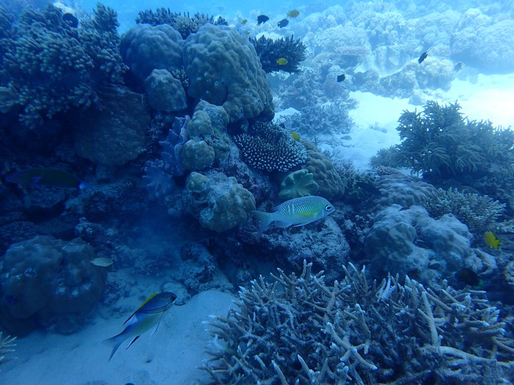 fi fish small.jpg