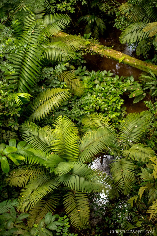 Tropical lowland rainforest, Costa Rica