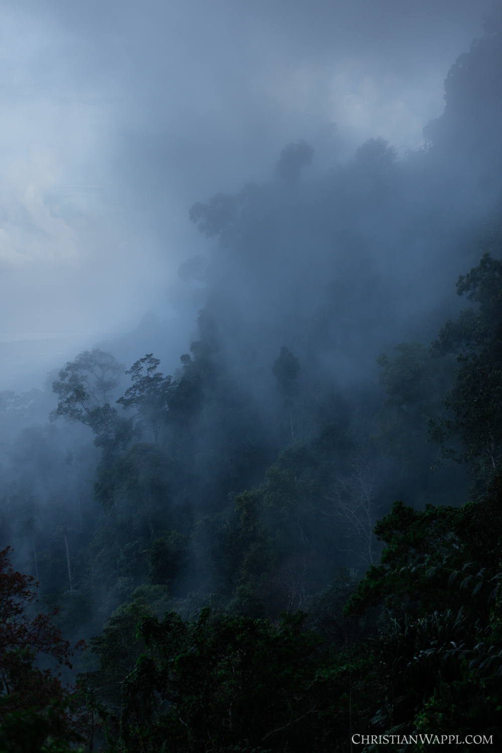 Cloud forest, Malaysia