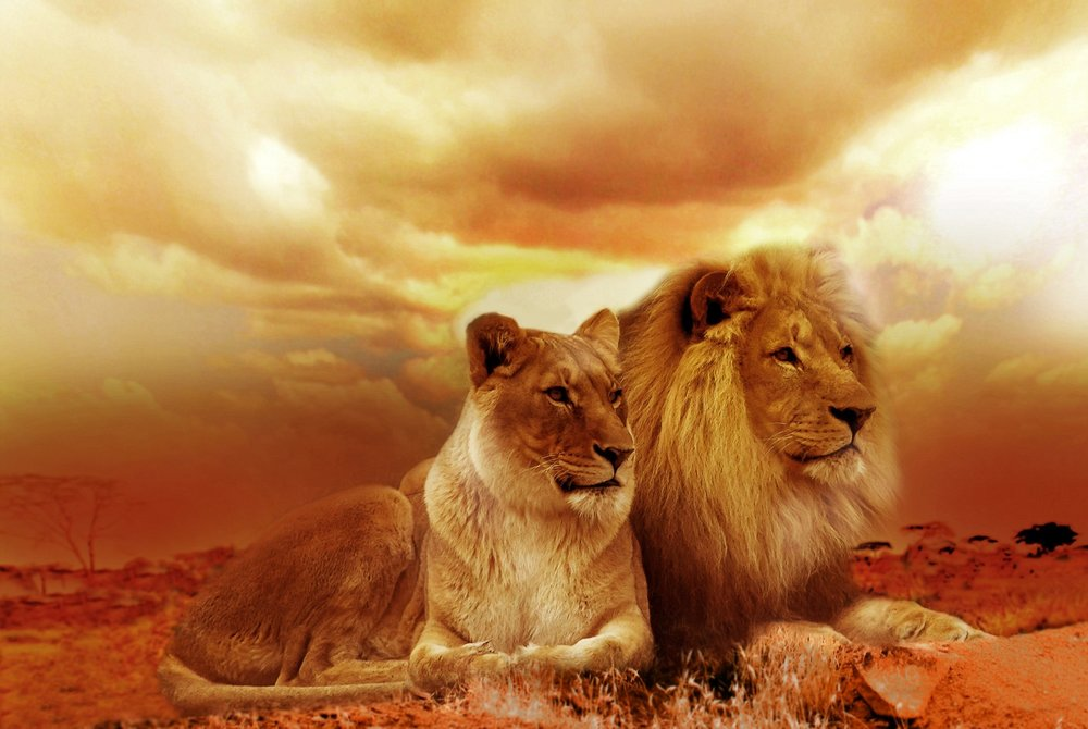 africa-animals-dusk-40756.jpg