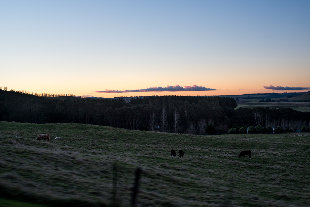 Kasia Kolmas New Zealand Winter-5.jpg