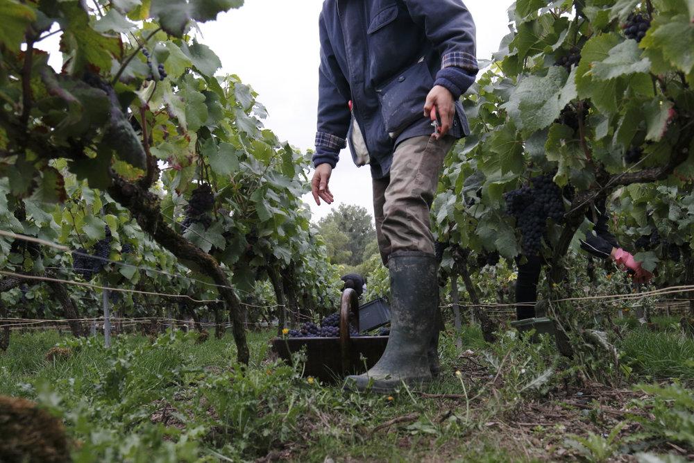 Philipponnat Harvest 2.jpg