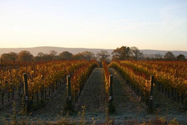 Ridgeview Winery & Estate