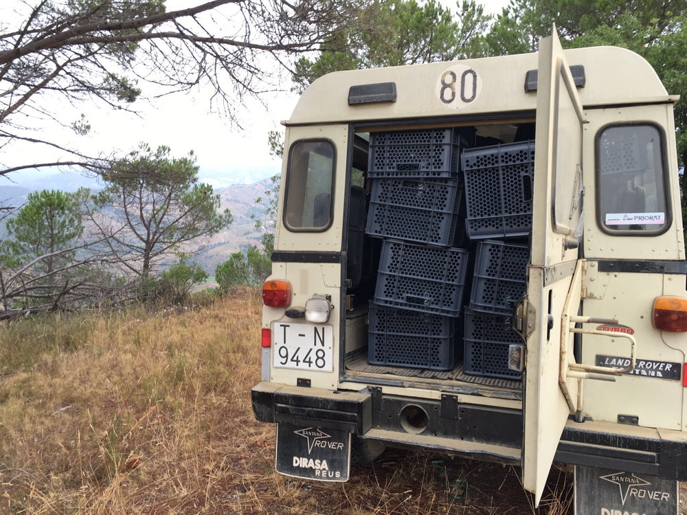 CASES IN THE LAND ROVER READY FOR HARVEST.jpg