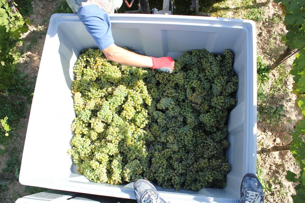 grape box.JPG