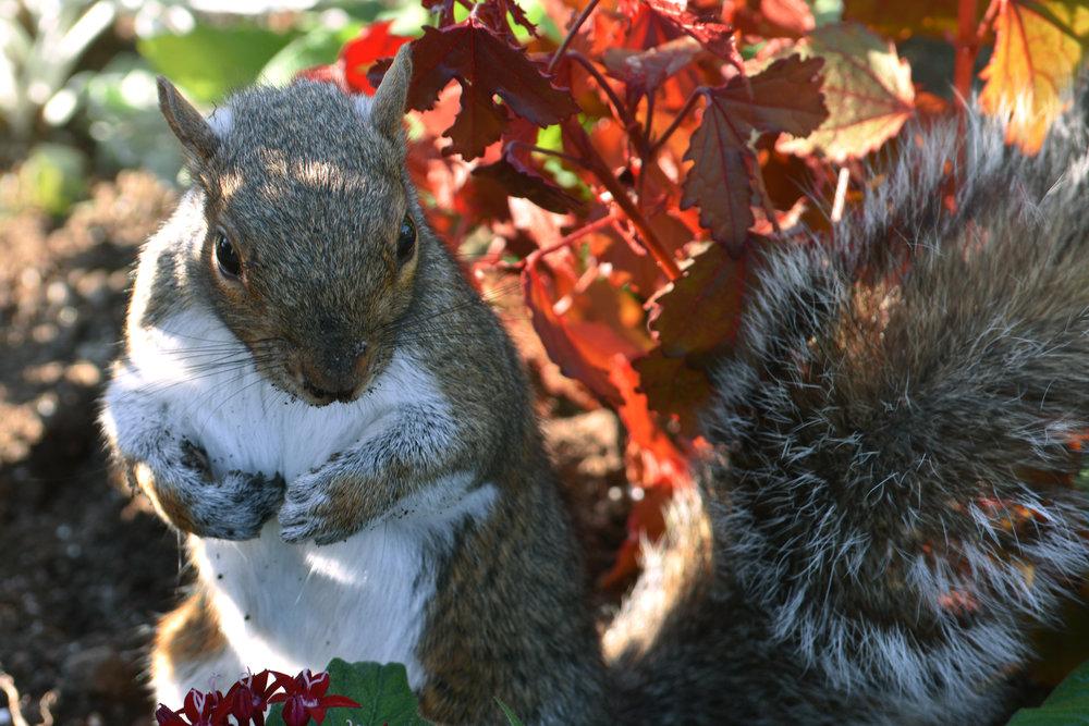 Squirrel web.jpg