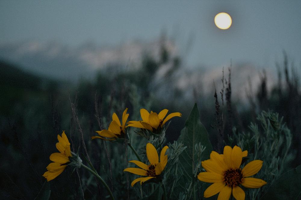 Moonrise Flowers web.jpg