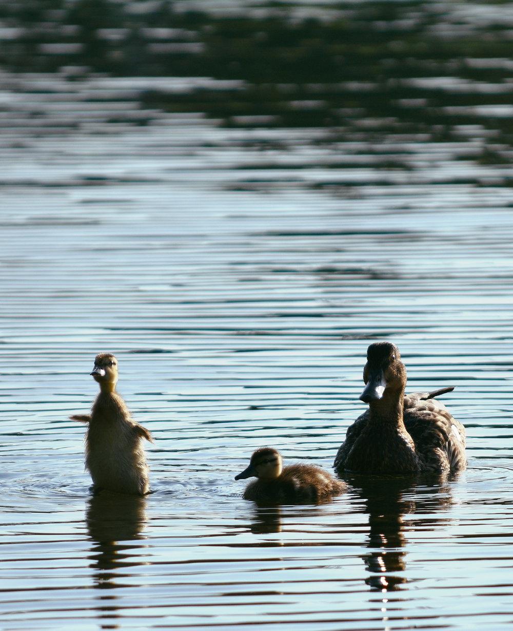 Duck Dynasty Web.jpg