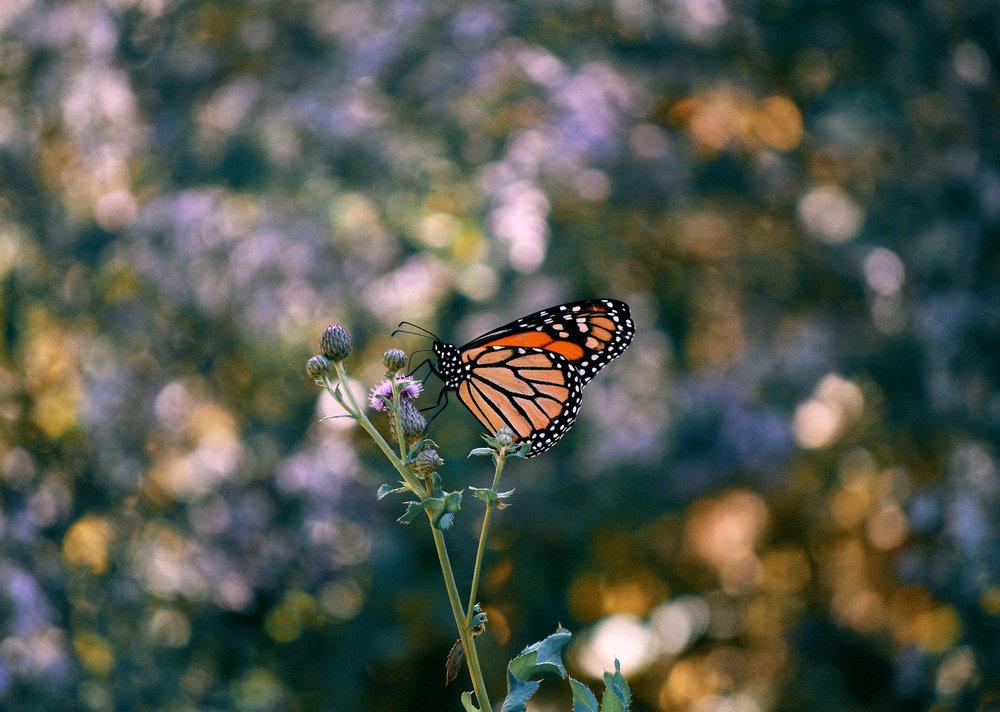 buterfly.jpg