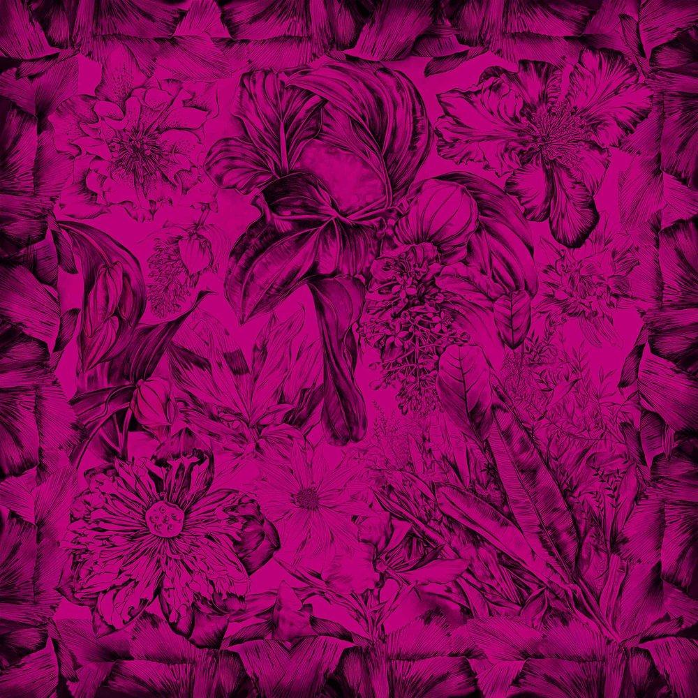 medinilla_Fuchsia-1.jpg