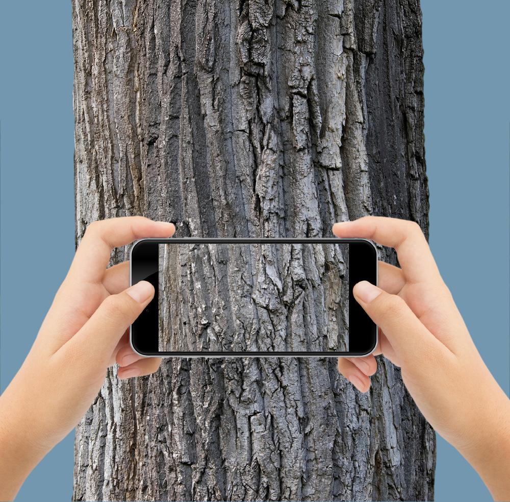 phone-tree-slider.png