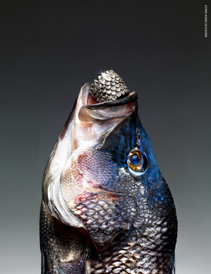 fish_scales_collection_notjustalabel_1526960326.jpg