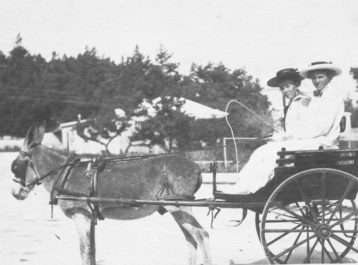 granny+in+donkey+cart+b&w.jpg