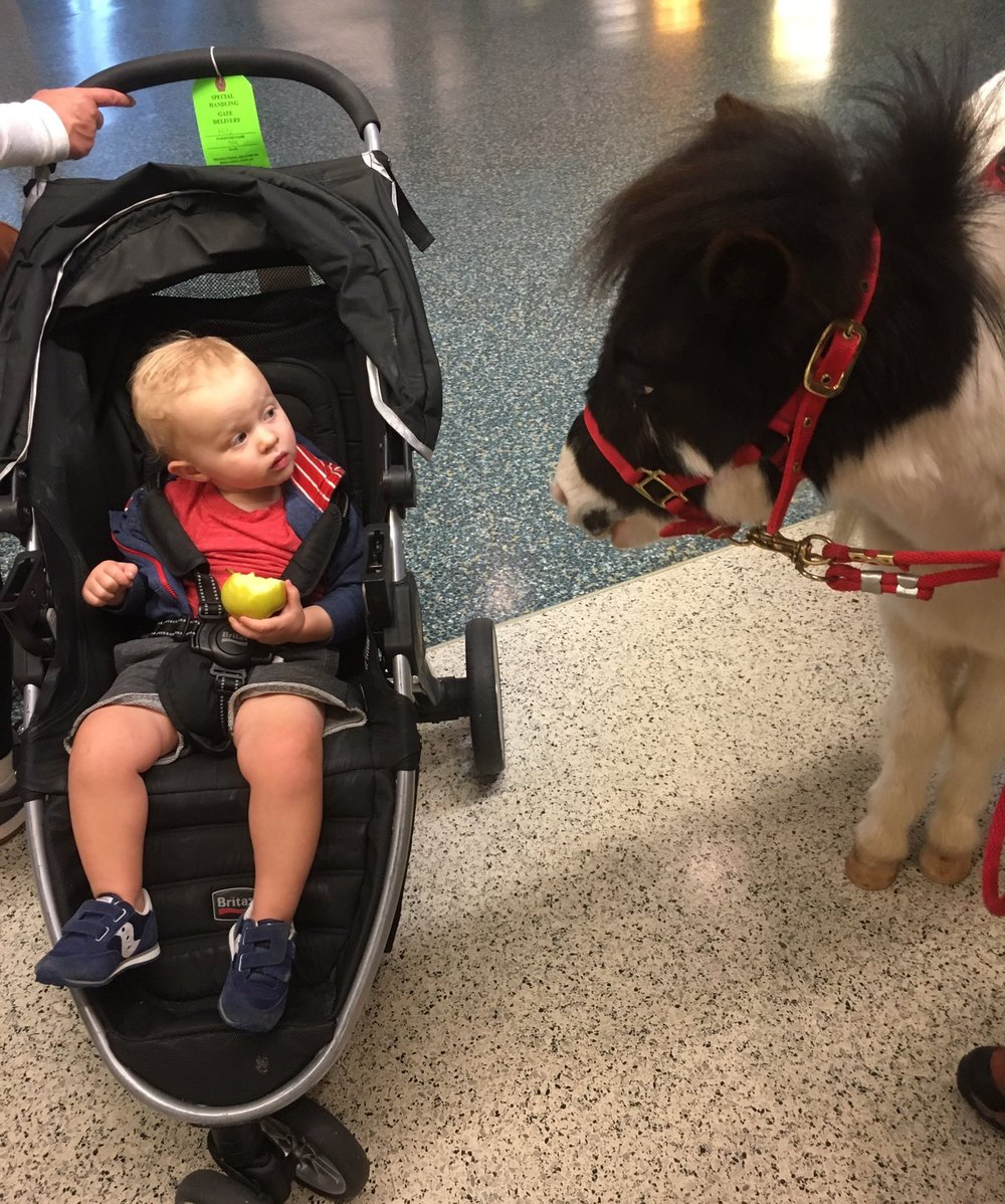 Baby with Miniature Horse