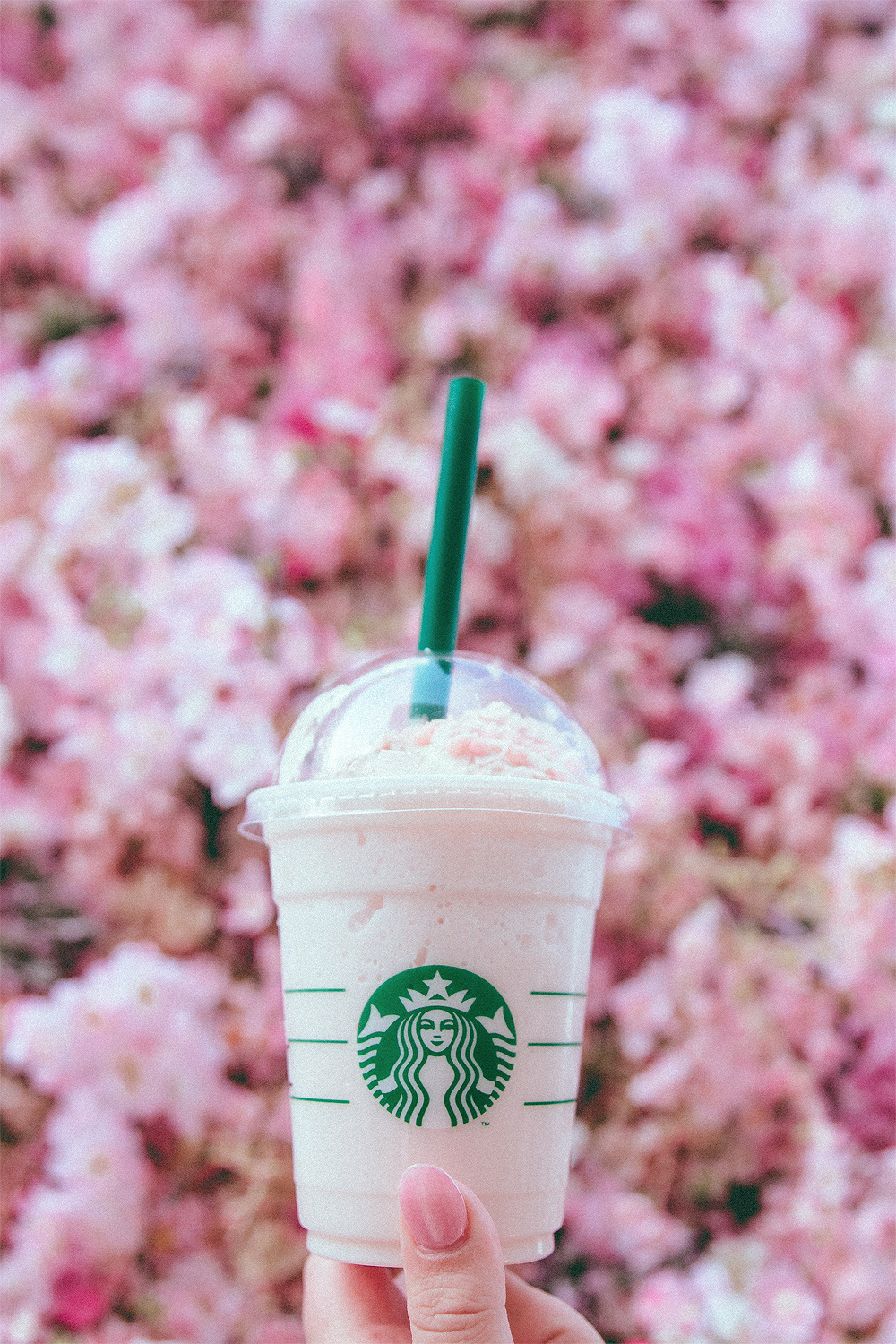 We had to try Starbuck's famous sakura frappucino. As tasty as it is photogenic. Personally, I wanted seconds.