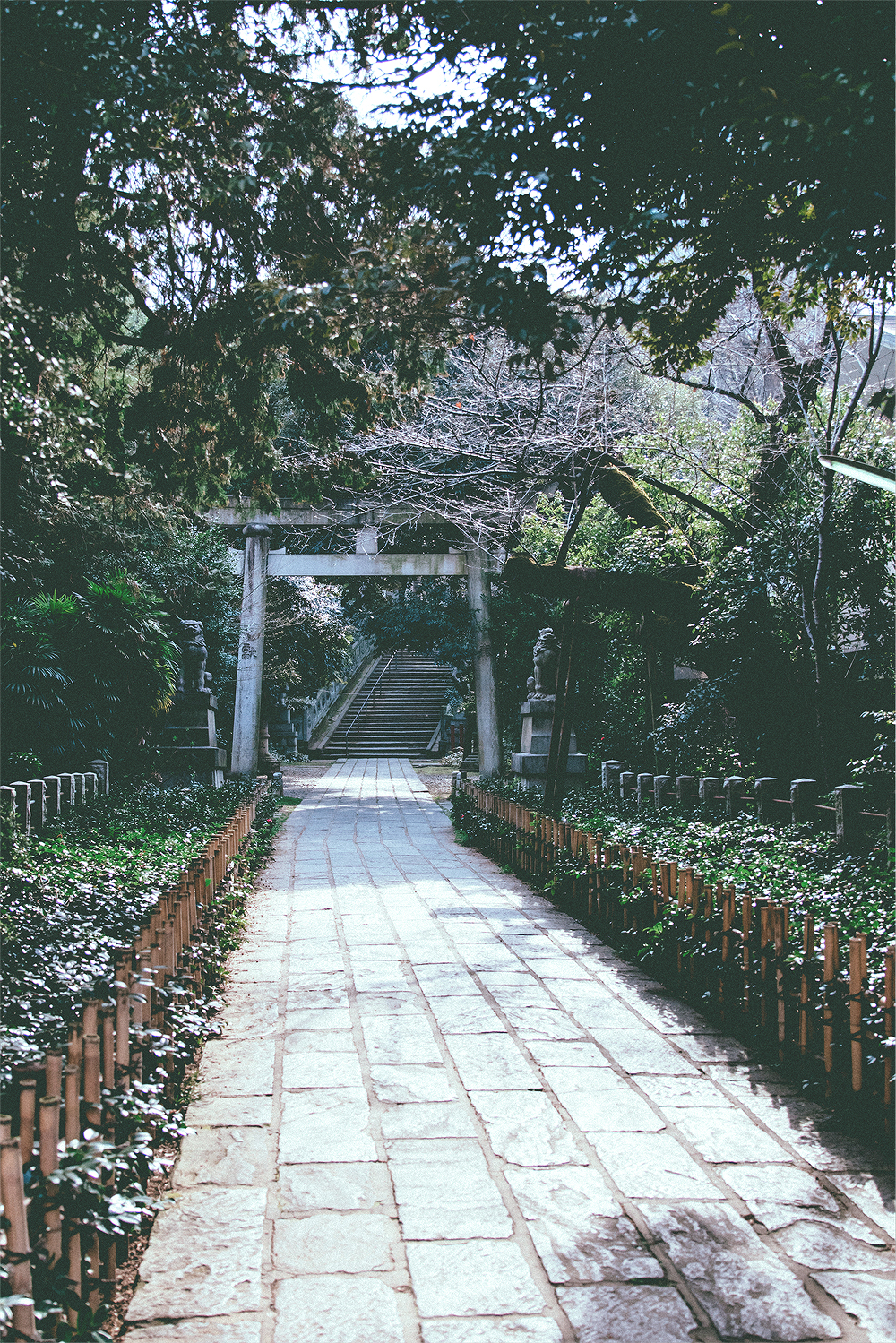 It should've taken us twenty minutes at most to get to the Hikawa Shrine, but it dragged on for an hour (after we took an alternative route!)
