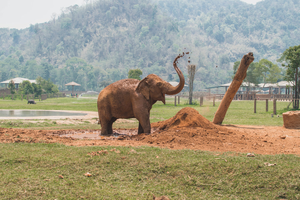 ELEPHANTS ARE THE BEST PART ABOUT CHIANG MAI.