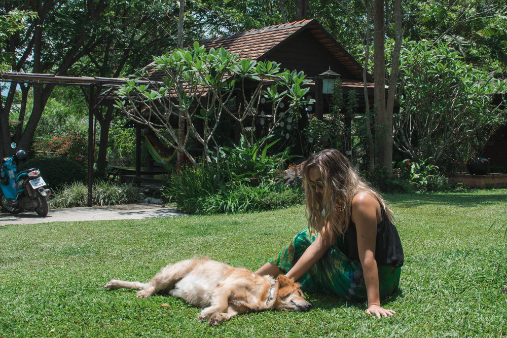 This is Ben, the golden boy in residence at Bannamhoo Bungalows and our best pal.