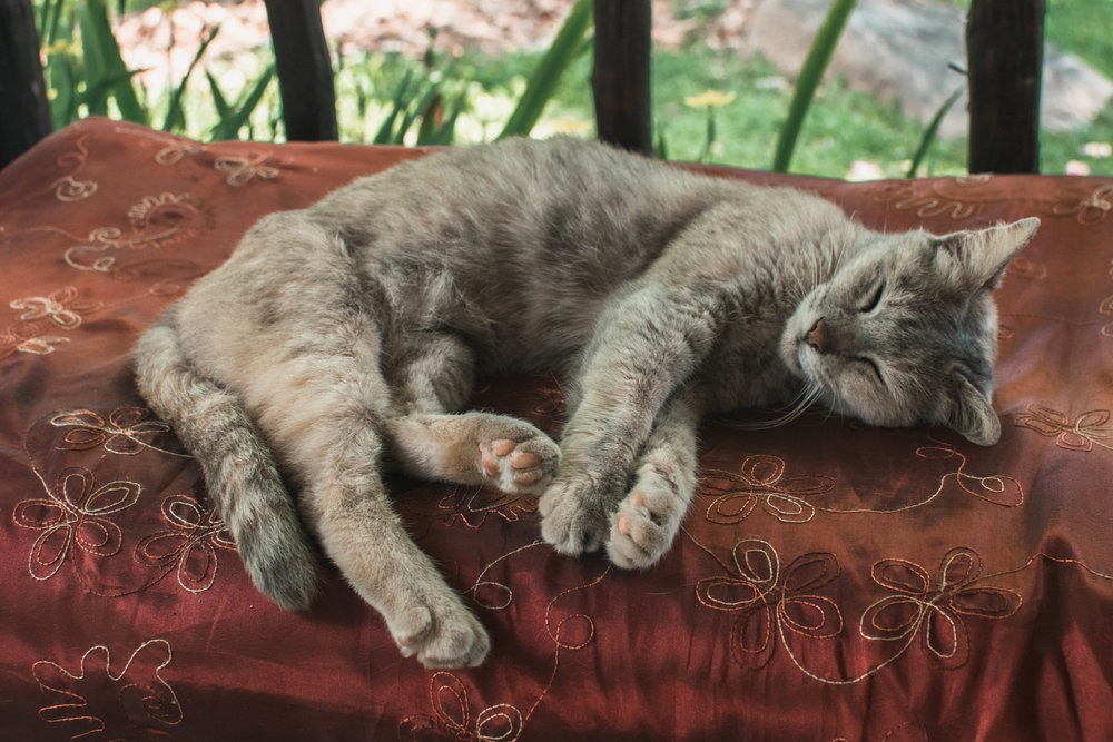 Just be like this cat: relax and enjoy yourself in Pai.