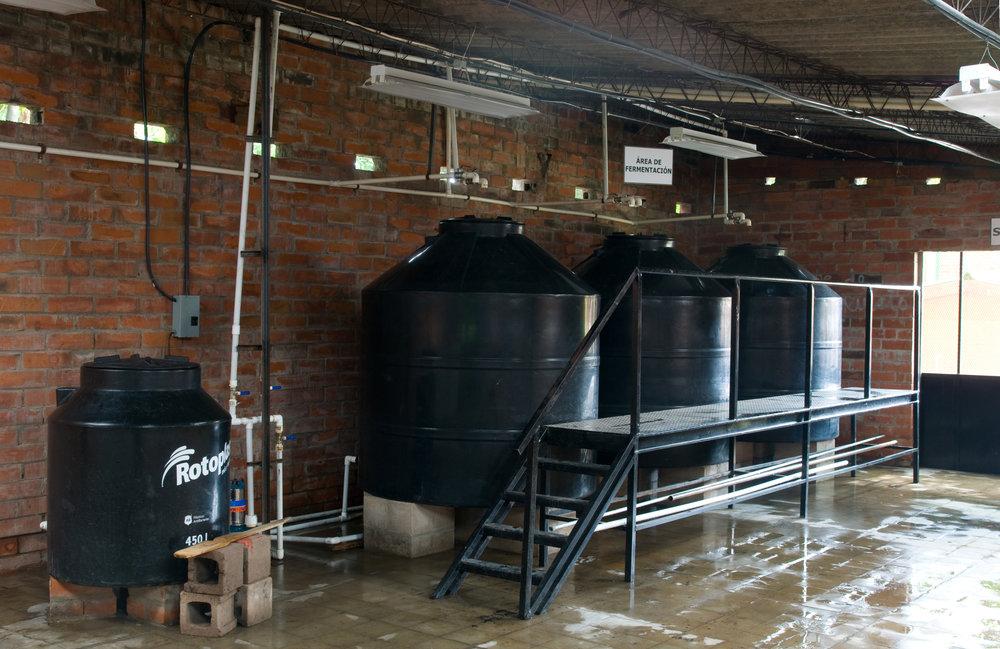 Process of Fermentation of Chaparro, Sacadera Flor de Fuego, Guazapa
