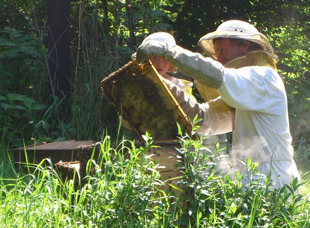 David and bees