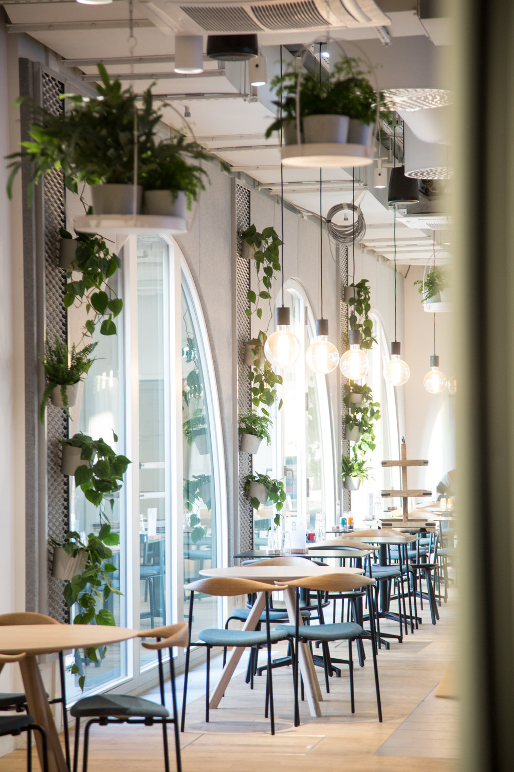 Google Offices - Greenery & Decoration