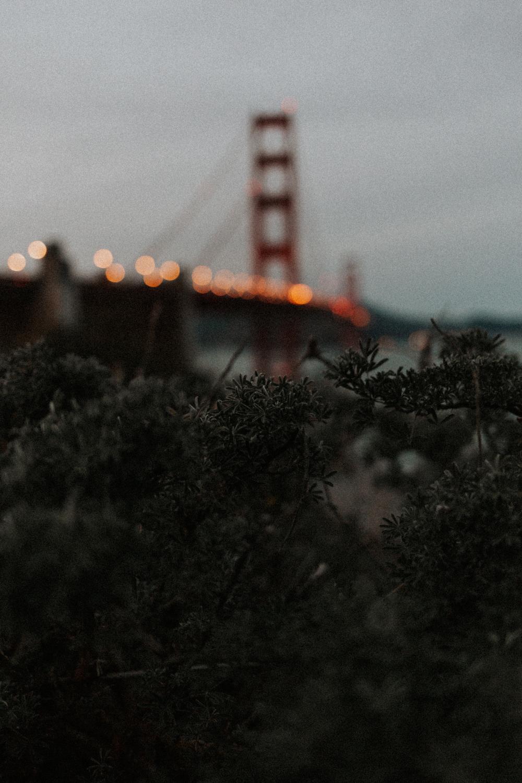 SarahOliviaPhoto-62.jpg