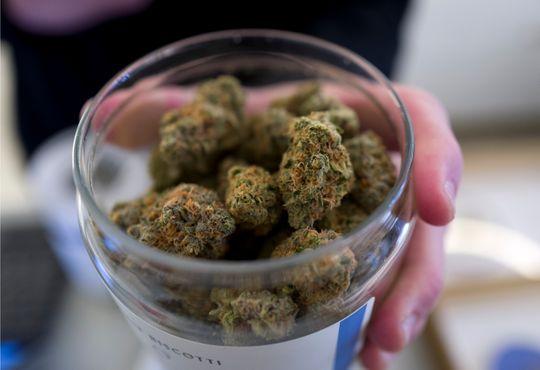usa today cannabis oped.jpeg