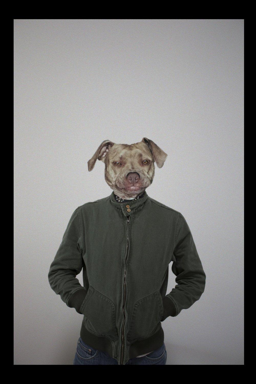 dogHead_comp_output_v01.jpg