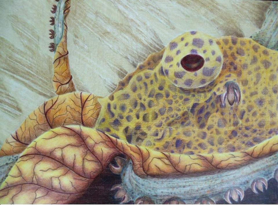 Smenospongia Octapus