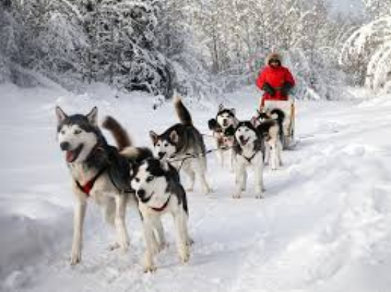 dogsledding.jpg