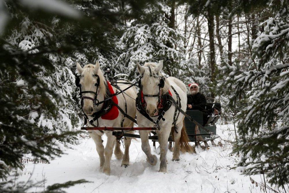 sleigh_ride_in_the_woods.jpg.size.custom.crop.1086x724.jpg