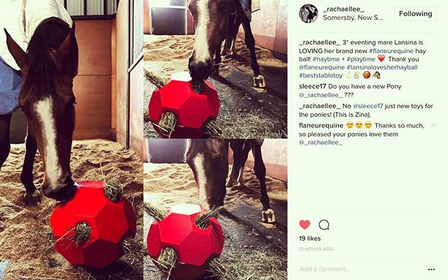 Thanks @_rachaellee_ for the pictures, we are so happy your ponies love their new toy 😍🐴💛 #qualitystableproducts #flaneurequine #hayballs #equestrianaustralia