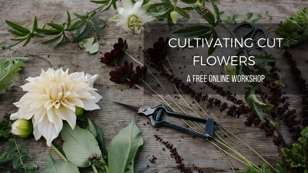 CULTIVATING CUT FLOWERS_Clare website.jpg