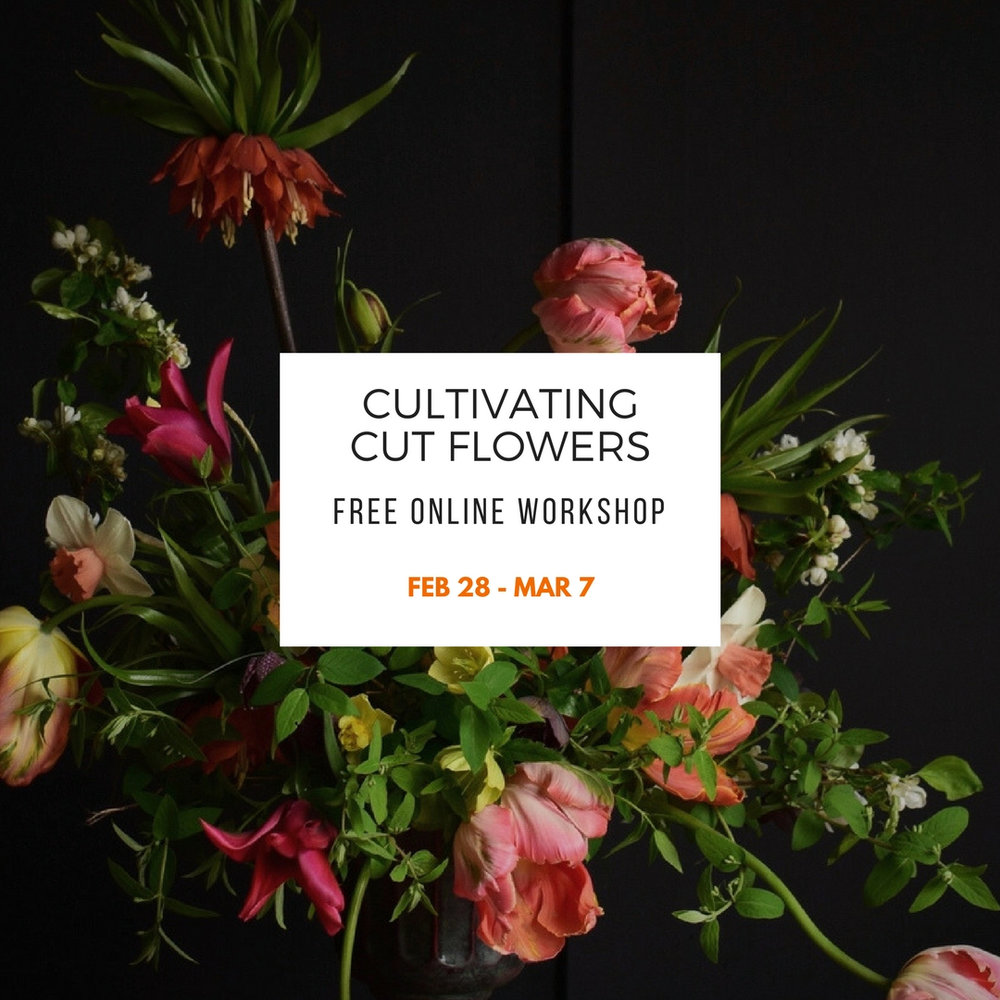 Free Workshop 2018_Instagram V3.jpg