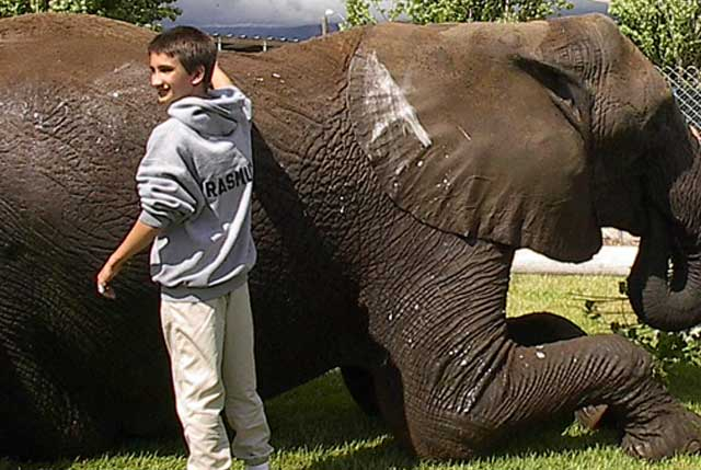 Dr. Burtch's son Cassidy helps to clean an elephant at the facility