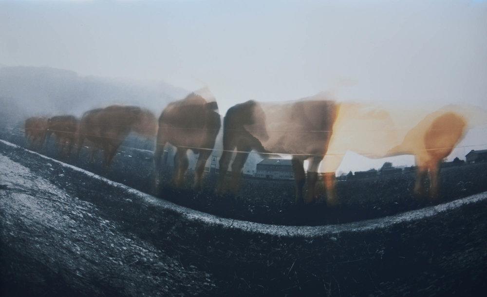 Les Vaches, von Elisabetha Günthardt
