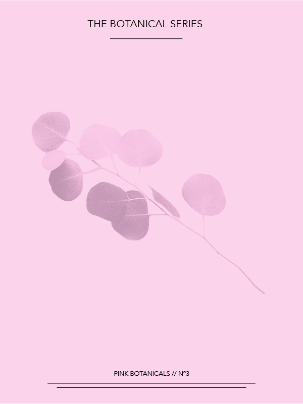 Pink Botanicals // No. 3 by Phylleli #design #graphicdesign #designer #botanicals #nature #inspiration #freelancedesigner #designblog #blog