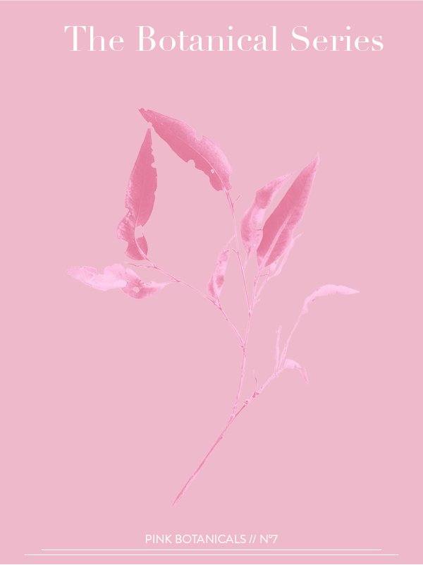 Pink Botanicals No. 7 // The Botanical Series by Phylleli #design #graphicdesign #pinkbotanicals #thebotanicalseries #designer #freelancedesigner #designblog #graphicdesignblog #creativity #getinspired #typography